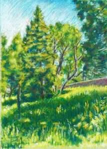 Hillside Field landscape